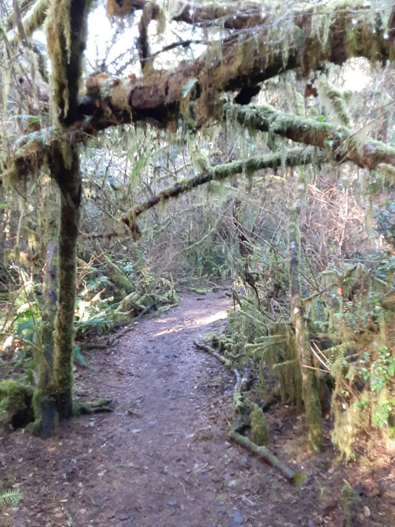 Six Easy Grays Harbor Trails to Warm Up Your Winter, Weatherwax Trail